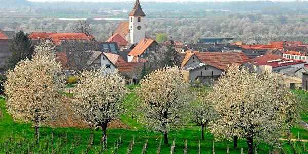 Königschaffhausen