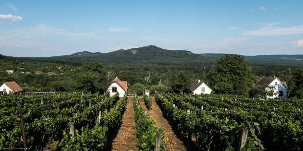 Vinohrady v obci Zalaszántó