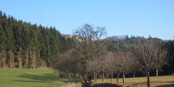 Ausblick auf Schloss Hohenfels