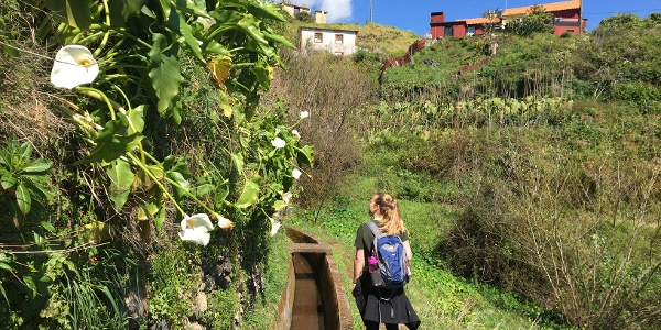 Discover beautiful rare flowers while walking along the levada