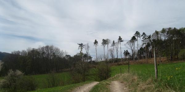 Im Bereich des Kienthalkreuzes (20.04.2012)
