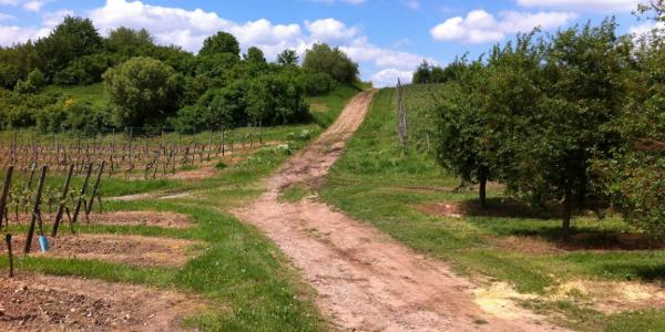 Die schwierigste Strecke zwischen Eckelsheim und Wendelsheim