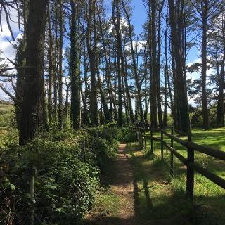 Woodland area