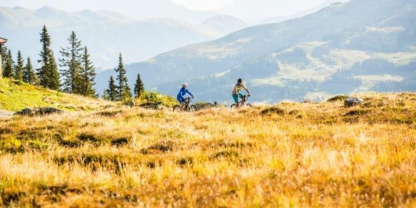 Herbstliche Wiesen in den Kitzbüheler Alpen