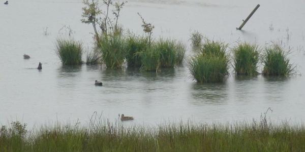 Surplombant l'étang U