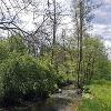 Im Buchenbachtal