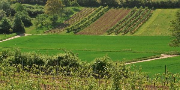 Blick ins Tal zwischen Mörzheim und Wollmesheim