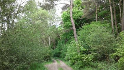 Sehr abwechslungsreicher Wald am Eisheck