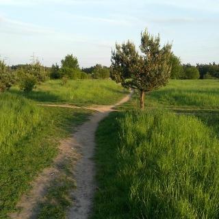 Cestou přes louku u Soběšic