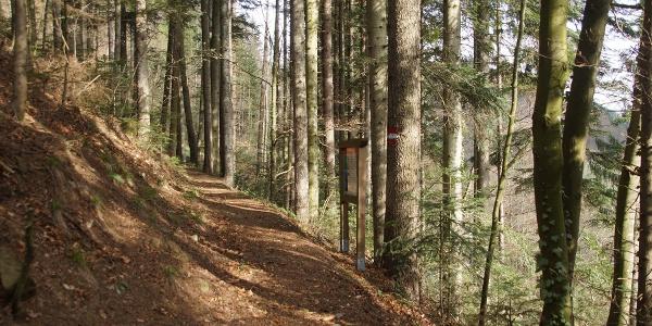 Das Waldlehrpfad