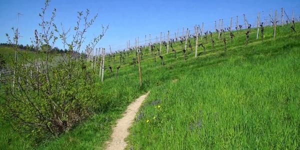 Die Alde Gott Panorama-Runde im Frühling
