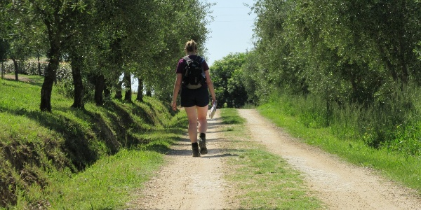 One of the olive tree-lined trails