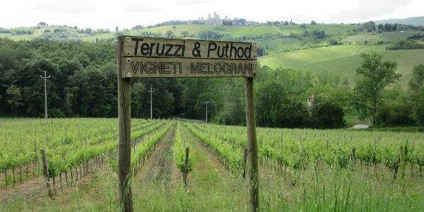 More vineyards!