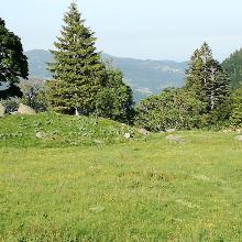 Wiese am Sentier des Roche