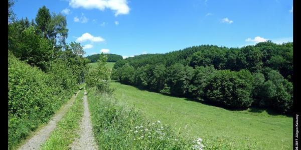 Tal zwischen Wipperfeld und Oberholl