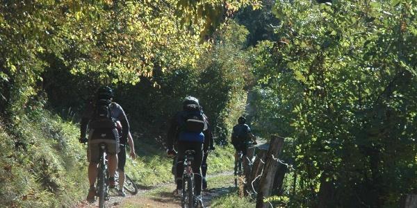 Biker auf dem Waldpfad