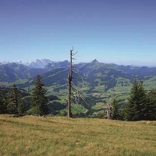Speer und Glarner Alpen vom Hinterfallenchopf