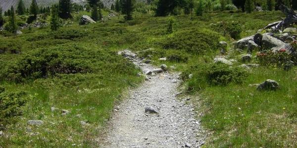 Trail zum See