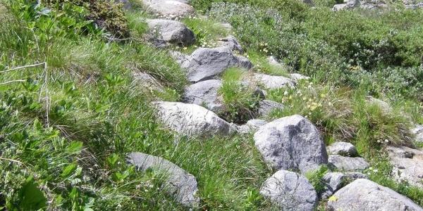 Steiler Trail