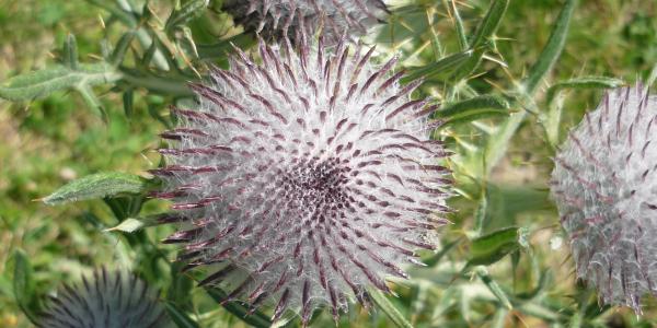 Faszinierende Alpenflora beim Moor