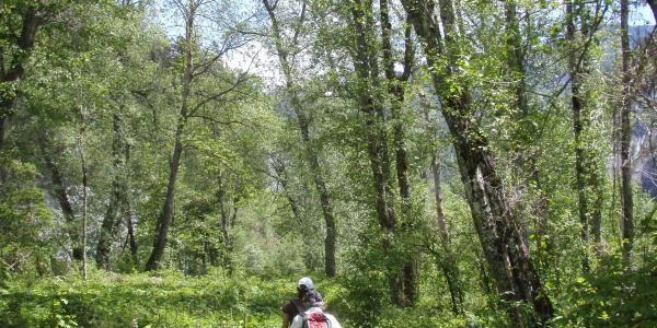 Naturmonument Ruinaulta