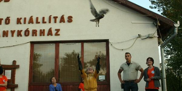 Egy gyógyult madár visszanyeri a szabadságát a Hortobágyi Madárparkban