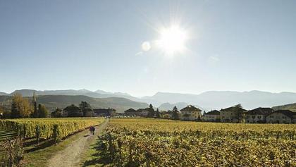 Weinlehrpfad Castel Sallegg