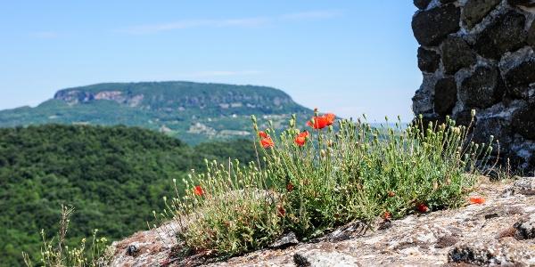Im Hintergrund ist Badacsony (die Burg von Szigliget)