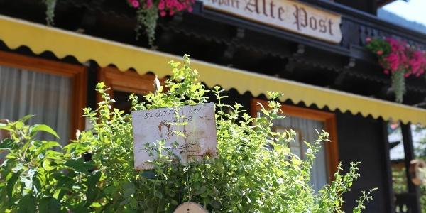 "Kräuterweg ""Probiar Amol"" - Apart Alte Post"