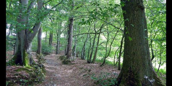 Wanderweg zwischen Wupper-Stausee und Berg