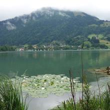 Aussicht auf dem Weg am großen Alpsee