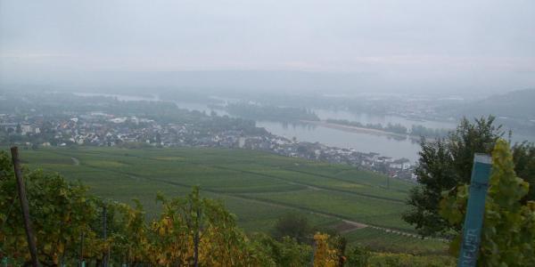 Blick zurück auf Rüdesheim