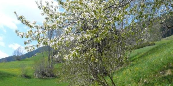 Frühling beim Chalet Alte Mühle