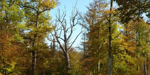 Neuweiler Viehweide im Herbst