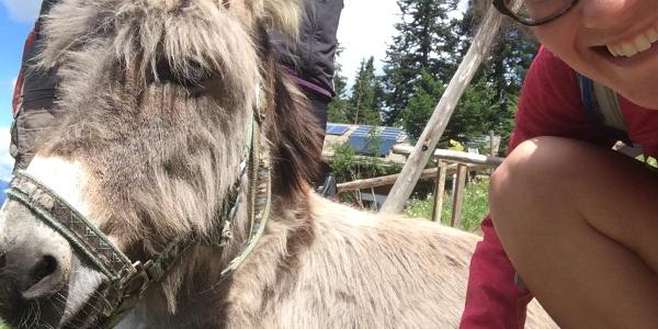 Yes, there is a donkey at Brunnsteinhaus ;)