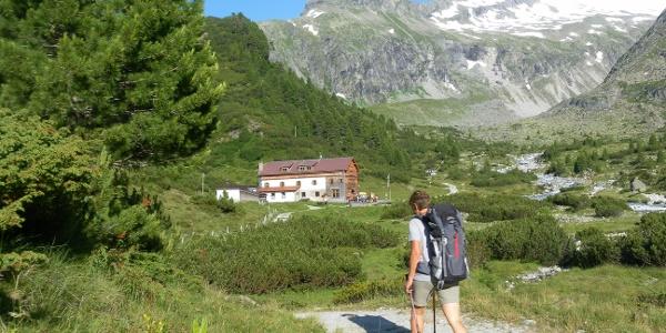 Alpenrose auf der Waxeggalm