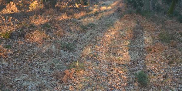 Waldstimmung unterwegs gegen Abend