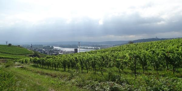 Blick nach Rüdesheim
