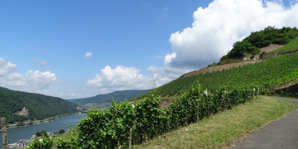Weinberge & Rhein vor Assmannshausen