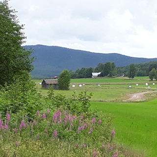Vägen till Stråsjö