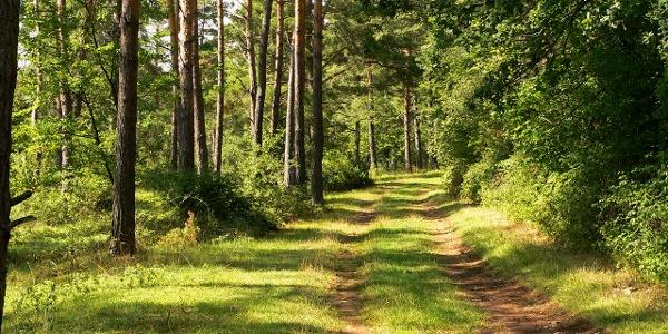 Waldweg am Venusberg