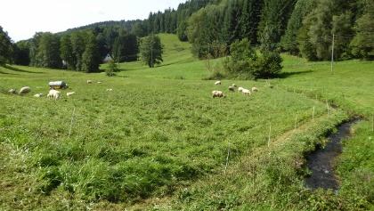 Eiterbachtal im Odenwald (Heiligkreuzsteinach)