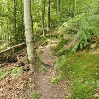 Aufstieg/Wolfersbacher Wand