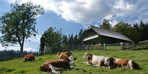 Geburtshaus mit Vieh auf der Sommerweide