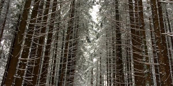 Winterlandschaft im Wald bei der Wittelsbacher Höhe bei Schweineberg