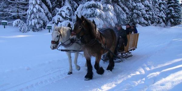 Mit dem Pferdeschlitten unterwegs im Saydaer Ski- und Wandergebiet
