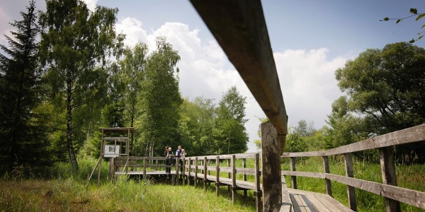 Aussichtsplattform im Benninger Ried