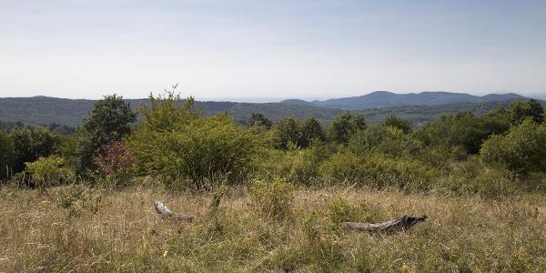 Kilátás a Piszkés-legelőnél