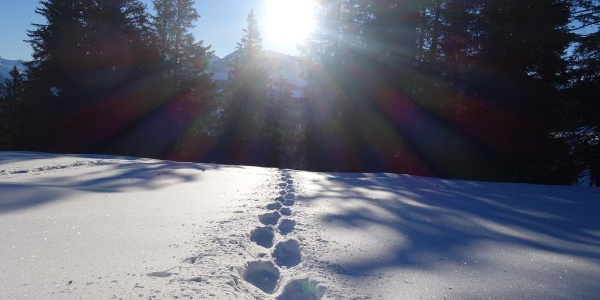 Aufstieg nach der Waldpassage Brambrüesch