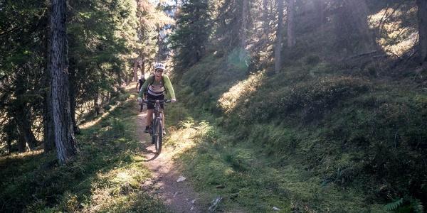 Buckelwald Trail